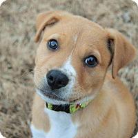 Adopt A Pet :: Ozzy - Bedminster, NJ