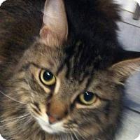 Adopt A Pet :: Felix - Brampton, ON