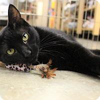Adopt A Pet :: Spica - Astoria, NY