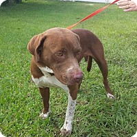 Adopt A Pet :: Reggie - Lake Placid, FL