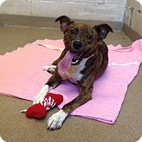Adopt A Pet :: 1-5 Harley - Triadelphia, WV