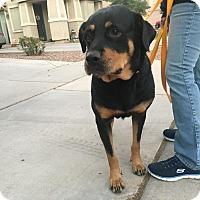 Adopt A Pet :: Demi - Gilbert, AZ