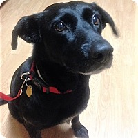 Adopt A Pet :: ADOPTED!!!   Kate - Channahon, IL