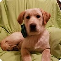 Adopt A Pet :: Aspen - Albany, NY
