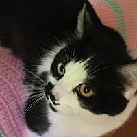 Adopt A Pet :: Lindy Lu - Durham, NC