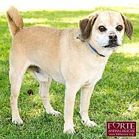 Adopt A Pet :: Jack - Marina del Rey, CA