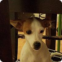 Adopt A Pet :: Sally Shamrock - Staten Island, NY