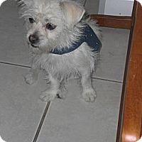 Adopt A Pet :: Maci - Rescue, CA