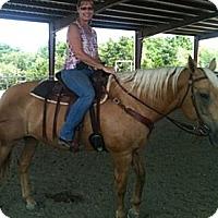 Adopt A Pet :: Dixie - Farmersville, TX