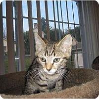 Adopt A Pet :: Patrick - Catasauqua, PA