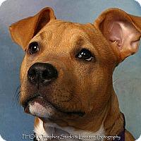Adopt A Pet :: Caasi - New Orleans, LA