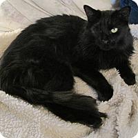 Adopt A Pet :: Lady - Florence, KY