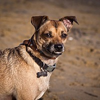 Adopt A Pet :: Buster - Orange, CA