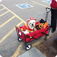 Adopt A Pet :: Molly - Glastonbury, CT