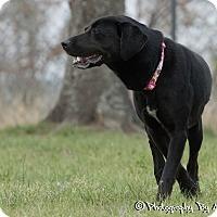 Labrador Retriever Mix Dog for adoption in Warner Robins, Georgia - CeCe