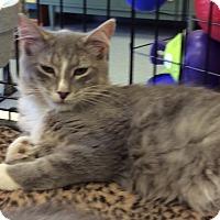 Adopt A Pet :: Corey - Port Republic, MD