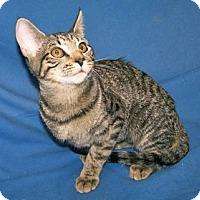 Adopt A Pet :: K-Sasha4-Simone - Colorado Springs, CO