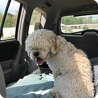 Adopt A Pet :: Shaq - Jackson, MS