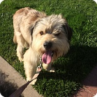 Adopt A Pet :: Marley - Newport Beach, CA