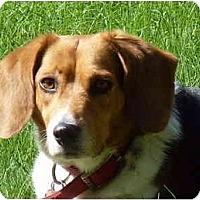 Adopt A Pet :: Travis - Phoenix, AZ
