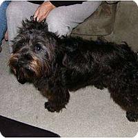 Adopt A Pet :: Graham - Mocksville, NC
