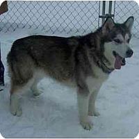 Adopt A Pet :: Lola--:Pending! - Belleville, MI