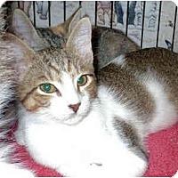 Adopt A Pet :: Mousetrap - Colmar, PA