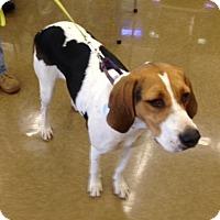 Adopt A Pet :: Carly - Toledo, OH