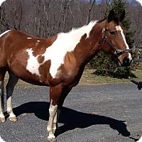 Adopt A Pet :: Lissa - Saugerties, NY