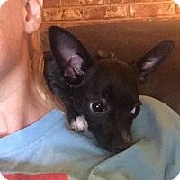 Adopt A Pet :: Carly - Homewood, AL