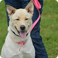 Adopt A Pet :: Sierra - Cleveland, TX