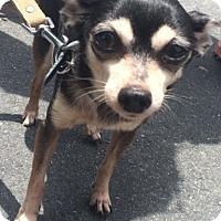 Adopt A Pet :: Paco - Jupiter, FL