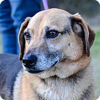 Adopt A Pet :: Peanut - Washington, GA