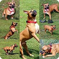 Adopt A Pet :: 1-4 Kato - Triadelphia, WV