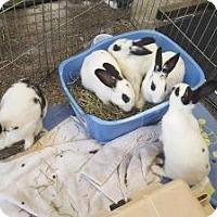 Adopt A Pet :: Dos - Los Angeles, CA