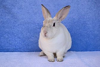 Rex Mix for adoption in Fountain Valley, California - Klondike