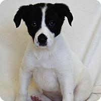 Adopt A Pet :: Tiara - Brunswick, ME