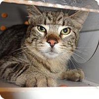 Adopt A Pet :: 338839 - Wildomar, CA