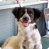 Adopt A Pet :: Baby - Waco, TX