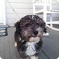 Adopt A Pet :: Keebler - Cumberland, MD