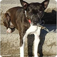 Adopt A Pet :: AmosPENDING! - Toronto/Etobicoke/GTA, ON