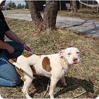 Adopt A Pet :: Max - Blanchard, OK