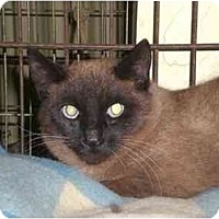 Adopt A Pet :: Chung Lee - Lombard, IL