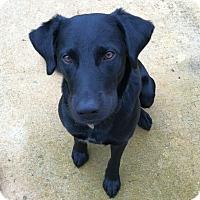 Adopt A Pet :: Banjo - Knoxville, TN