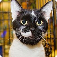 Adopt A Pet :: Lela - Irvine, CA