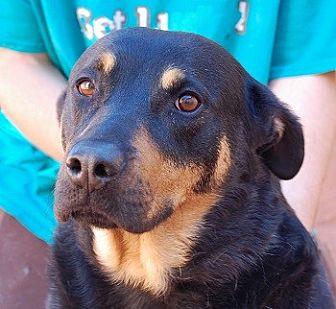 Rottweiler/Shepherd (Unknown Type) Mix Dog for adoption in Las Vegas, Nevada - Thelma