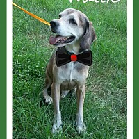 Adopt A Pet :: Wallie - Ocala, FL
