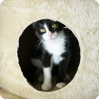 Adopt A Pet :: Beauty - Columbia, TN
