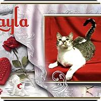 Adopt A Pet :: Layla - Davison, MI