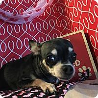 Adopt A Pet :: Bonita - Lehigh, FL